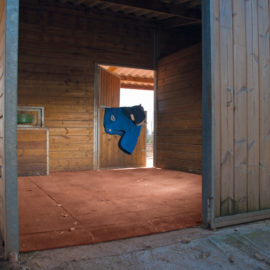 Horse riding tiles